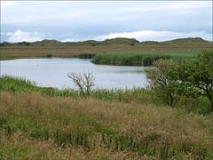 The Lough (ExeDave) Tags: uk england lake reed landscape geotagged sand lough dunes dune july northumberland gb vegetation holyisland lindisfarne wetland 2012 freshwater reedbed emergent nnr nationalnaturereserve thelough sssi p7241679 geo:lat=5567935383390574 geo:lon=1782754361629486