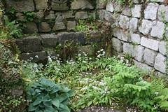 IMG_7455 (bulbinello) Tags: fern garden ferns farne fougres fougre polystichum varens osmunda dryopteris blechnum athyrium osmonde