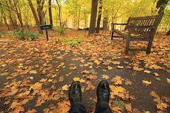 Fall has fallen... (amee@work) Tags: fall minnesota bench october seat minneapolis arboretum foliage fallen 2013