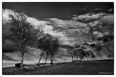 Trees (Oddbjrn Strand) Tags: trees sky blackandwhite bw nature norway clouds landscape norge hole skyer landskap sorthvitt buskerud naturbilde