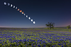 Lunar Eclipse Bluebonnets (Mike Mezeul II Photography) Tags: red sky moon composite night stars eclipse timelapse blood nikon texas space astro astrophotography ennis wildflower lunar bluebonnets d800 mezeul machroad