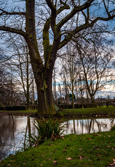 A Dreary & Dull Winter Scene (Khalid H Abbasi) Tags: d90 nikon earlsdon coventry england war park memorial winter tree pond water nature