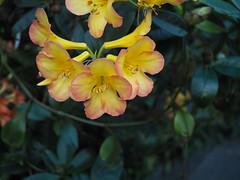 P3105414 (ong_jeric) Tags: olympus olympuspenepl7 mzuiko 17mm mzuikodigital17mmf18 singapore gardensbythebay