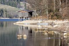 Lake Hinterstein (Tyrol) # 3 (Bergfex_Tirol) Tags: lake see bergfex hintersteinersee tyrol reise tirol oesterreich österreich austria nordtirol travel northtyrol alpes alps alpen moutainlake lac bergsee spring frühjahr frühling ente duck kaisergebirge kaisermountains wilderkaiser bootshaus boathouse