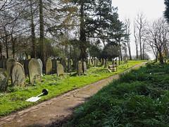 lightside (Johnson Cameraface) Tags: 2017 march spring olympus omde1 em1 micro43 mzuiko 1240mm f28 johnsoncameraface yorkcemetery cemetery york yorkshire tomb graves headstone gothic path
