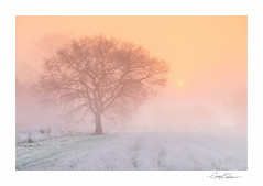 Pang Tree I (George-Edwards) Tags: landscape tree winter sunrise dawn morning daybreak sun light frost mist fog cloud sky field farmland nature rural countryside path seasons valley vale riverpang berkshire uk georgeedwards