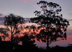 Sunset beyond the gums (padraic_koen) Tags: sunset adelaide southaustralia