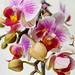 Orchid blooms DSC_0024