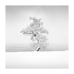 Lake Yogo (StephenCairns) Tags: 2017 laketogo snow winter japan shiga shigaprefecture bonsai ducks deep haiku