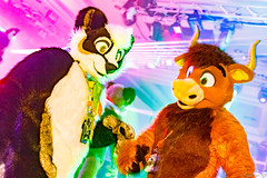 _MG_0660 (Tiger_Icecold) Tags: confuzzled cfz2016 cf2016 furcon furry convention fursuit birmingham party deaddog ddp deaddogparty
