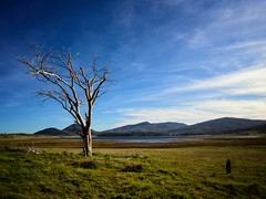 The Lone Tree. (isaacullah) Tags: