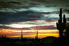 DSC_2535 (lilnjn) Tags: arizona southwestunitedstates travel unitedstates whitetank