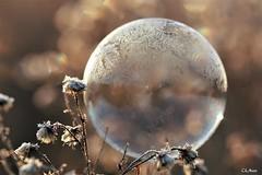 gèle du matin... (mars-chri) Tags: bulle gèle nature laprairie isleadam valdoise cristaux graphisme lever de soleil
