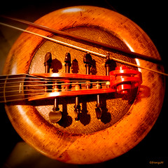 Viola di Gamba (frenziM) Tags: music musicinstrument concert viola violadigamba light darknesslight