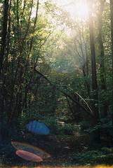 Glowing forest (j.farrimond) Tags: glow forest uk green nature trees sunset sunshine lens flare