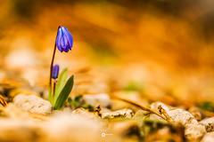 Printemps (L'agriculteur Illuminé) Tags: printemps dylan koller fleur macro macrophotographie macrophotography suisse locle nature 100mm 5d mark iii orange violet