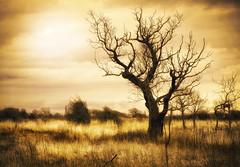 Tree (Jem Salmon) Tags: