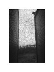 dirty grain (Marek Pupák) Tags: central europe slovakia blackandwhite bw monochrome rangefinder leica film analog ilford xp2 documentary poetic bird pigeon