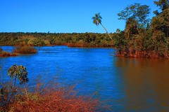 IMG_0214 Misiones habitat I (Rodolfo Frino) Tags: misiones argentina tree fores rainforest trees arbol arboles natur natura nature naturaleza flora water river iguazu reflections blue bright sky palm palmtree heat paisaje landsacape landschaft paysage rio bluesky day