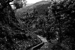 wpid-chakraata-36 (harshchiki) Tags: mountains india hills winter blackandwhite bw