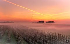 Acquoy-Betuwe 2017@FTW (@FTW FoToWillem) Tags: betuwe vorst frost mist misty icecold cold blossom bloessem fruitteelt nature natuur morning ochtend sun sunrise zon zonsopkomst nederland netherlands dutch holland hollanda holandes hollande ftw fotowillem willemvernooy tree trees acquoy gelderland europa europe landschap landscape