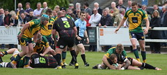 BW0Y3051 (Steve Karpa Photography) Tags: henleyhawks henley rugby rugbyunion game sport competition outdoorsport redruth