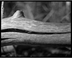CO2017-P67-Delta100-353 (eagle112800) Tags: nature tree tress dead