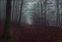 Boira (niebla) (antoniocamero21) Tags: paisaje bosque color foto sony atardecer nieble boira árboles hayas invierno montseny barcelona catalunya natural parc