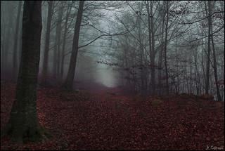 Boira (niebla)