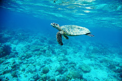 <3 (Landersz) Tags: philippines filippine coron palawan club paradise snorkeling turtle shark clownfish nemo dugong landersz canon 5dmk3 nimar gopro hero5