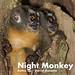 Night Monkey, Aotus sp.