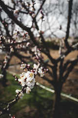 R e v i v a l (Bi' garip mühendis adayı) Tags: bokeh blossom spring flower green pink art tumblr vintage vintageediting editing photo photography purple expression feeling feelings new fotograf fotoğraf light moody blury mood soul canoneos canoneos1300d canon lights blue blur revival