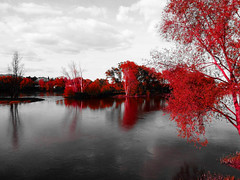 Le Rouge et le Noir (François Tomasi) Tags: loire indreetloire villedetours fleuve touraine france europe tomasi françois françoistomasi pointdevue pointofview pov google flickr yahoo lumières lumière colors color rouge red noir black photo photographie photography photoshop composition reflection nikon reflex avril 2017 nuages nuage clouds cloud arbre tree eau water
