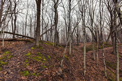 Frontenac Spring (Tony Webster) Tags: frontenac frontenacstatepark lakepepin minnesota mississippiriver earlyspring forest leaves spring statepark trees unitedstates us