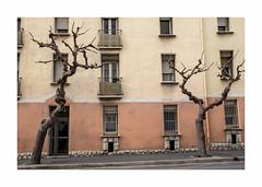 Untitled (hélène chantemerle) Tags: cité building arbres fenêtres rue jaune orange street city trees yellow