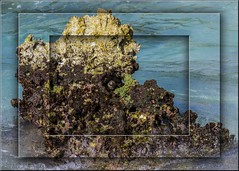 Sea Life on the Rocks (Sugardxn) Tags: garypentin sugardxn canon canon7d canoneos7d cayman grandcayman outdoor photoshop picswithframes caribbean coral algae kelp sealife