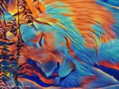 The Colourful King (Belinda Fewings (3 million views. Thank You)) Tags: mirage themirage panasoniclumixdmc belindafewings katz catz animals lines experiment artistic creative creativeartphotography cat animal usaunitedstatesofamerica usa lasvegas abstract siegfriedandroyssecretgarden