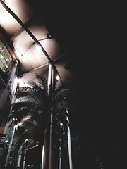 Palms. (a.zphotography) Tags: doha qatar s7 edge samsung takenwithgalaxy streets car holiday street asia sky building azphotography az photography phone mobile architect design