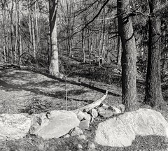 Trees and Rocks (Chaz Cheadle) Tags: blackandwhite trix400 nature landscape yashicamat tlr 120mm mediumformat 6x6