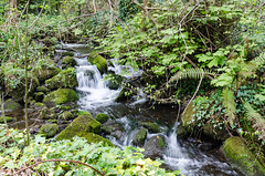 Brennanstown - DSC_0454 (John Hickey - fotosbyjohnh) Tags: 2017 april2017 cherrywood brennanstown glendruid river waterfall stream shrubbery dublin ireland