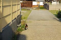 Today's Cat@2017-04-05 (masatsu) Tags: cat thebiggestgroupwithonlycats catspotting pentax mx1