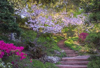 Follow the stairs into spring