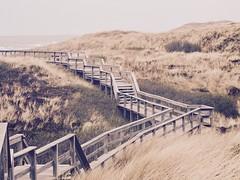 Sylt (mrburton75) Tags: urlaub holiday wenningstedt sand storm sturm norden friesland friesen wai way weg wege beach wood gras holz strand dünen insel nordsee sylt