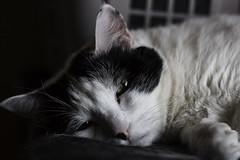 Zzzzz... -[ Happy Caturday ]- (Carbon Arc) Tags: happycaturday cat sleep rest nap snooze feline furball fuzzball face