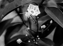 spring color ? (Our View Photography) Tags: macro bandw bw flower canon70d canonef100mmf28macrousm aikensc hopelandgardens