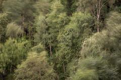 Tree Movement (Old-Man-George) Tags: georgewheelhouse landscape peakdistrict uk britain wwwgeorgewheelhousecom d883548 blur treescape motion wind gale