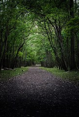 at the forest (ezravessen) Tags: path nature trees forest holland