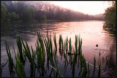 Sunset at Grenadier Pond (Jean-David & Anne-Laure) Tags: 28mm blossom cherry color flowers fog highpark leica leicaq pond rain sprint sunset toronto tree warm wideangle