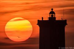 _D819271 : Kermorvan sunset (Brestitude) Tags: kermorvan kermorvant phare lighthouse soleil sun coucher couché silhouette bird oiseau orange chaud jaune finistère leconquet bretagne mer iroise brittany breizh ©laurentnevo2017
