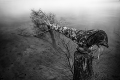 fallen (sebastian.marek) Tags: nikonnikkorafsdx18105mmf3556vred nikond5300 tree water lake longexposure fallen dead reflections cloudy mist blackandwhite bw monochrome landscape broken outdoor